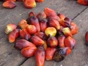 Palmnoot diepvries 1000 gram