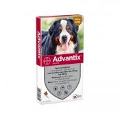 Advantix Spot-On 600/3000 4 Pipetten 40-60 kg