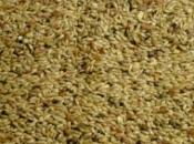 Wierikx postuur kanarie zaad 2,5 kg