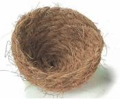 cocos nestje